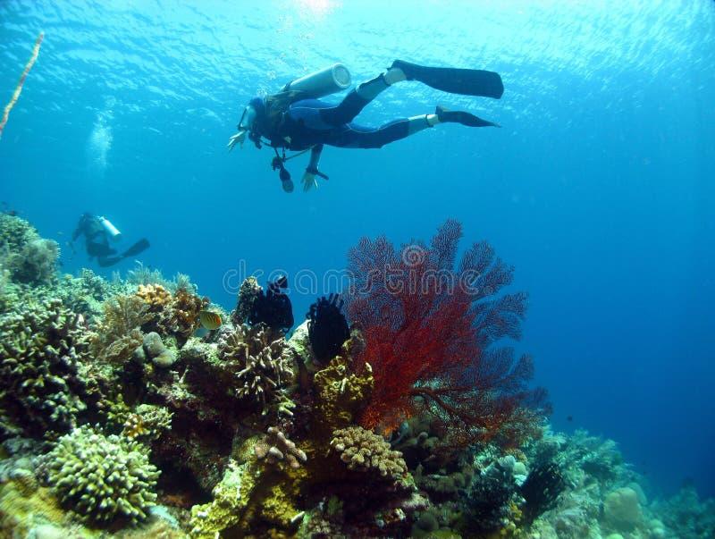 在seafan珊瑚的潜水员之上 免版税库存照片