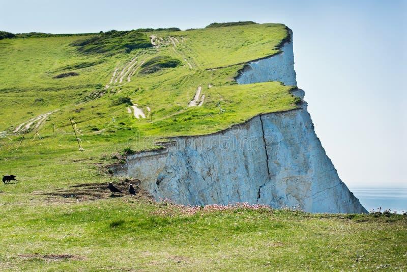 在Seaford头,东萨塞克斯郡,英国的白色白垩峭壁 免版税库存图片