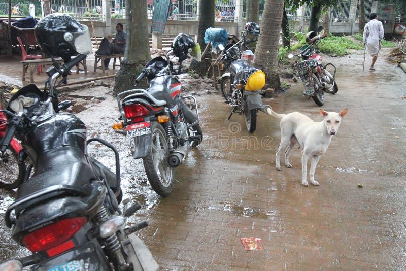 在Shorawarddi公园,达卡,孟加拉国的人日常生活 免版税库存图片