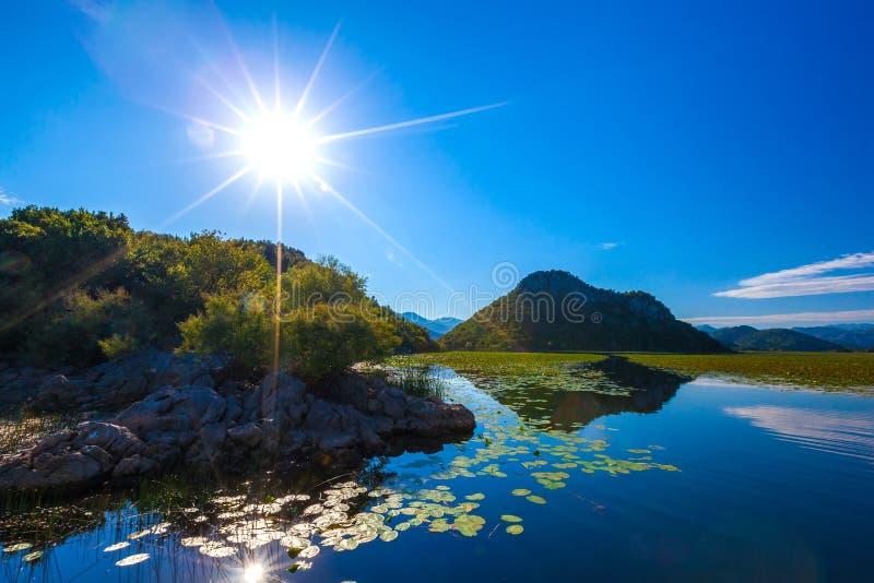 在Skadar湖上的明亮的太阳,长满与水lilie 库存照片