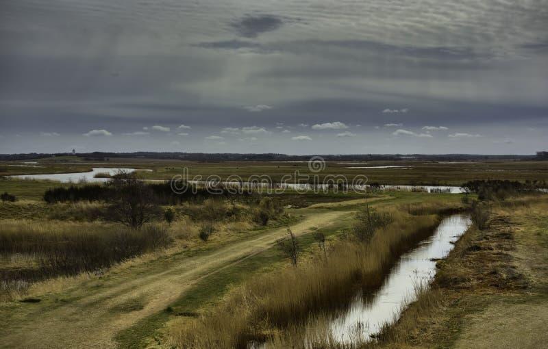 在Skjern,丹麦附近的草甸 免版税图库摄影