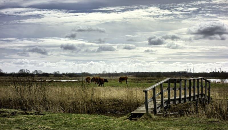 在Skjern,丹麦附近的草甸 免版税库存图片