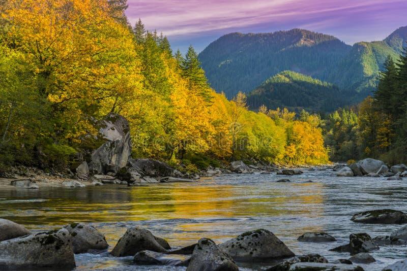 在Skykomish河,华盛顿州的秋天颜色 免版税库存图片