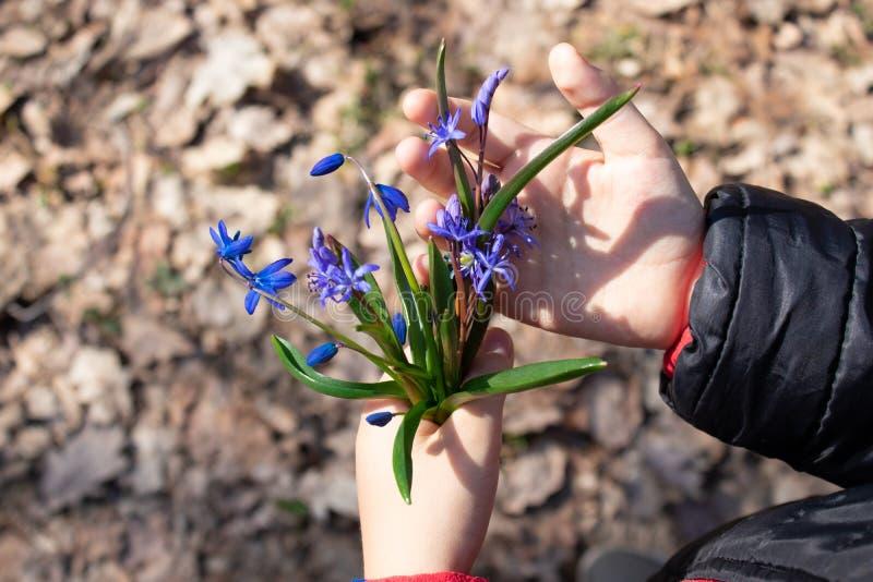 在snowdrops森林特写镜头的Snowdrops  手中花的snowdrops 库存图片