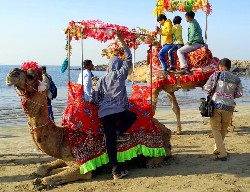 在Somnath海滩的五颜六色的骆驼乘驾在阿拉伯海古杰雷特,印度 免版税图库摄影