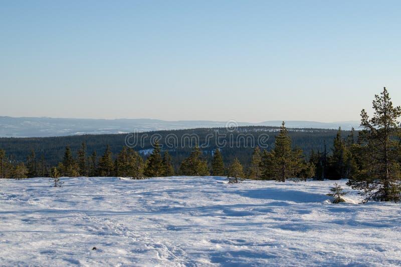 在stenfjellet hedmarksvidda海德马克郡县挪威的冬天场面 免版税库存图片