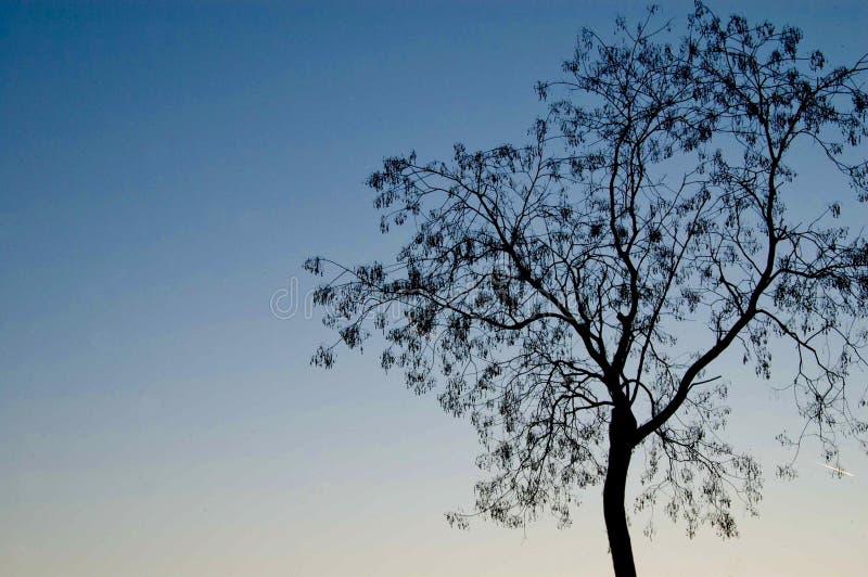 在StLouis街道附近的树在密苏里,美国 如果有许多树,我们叫它作为森林 免版税图库摄影