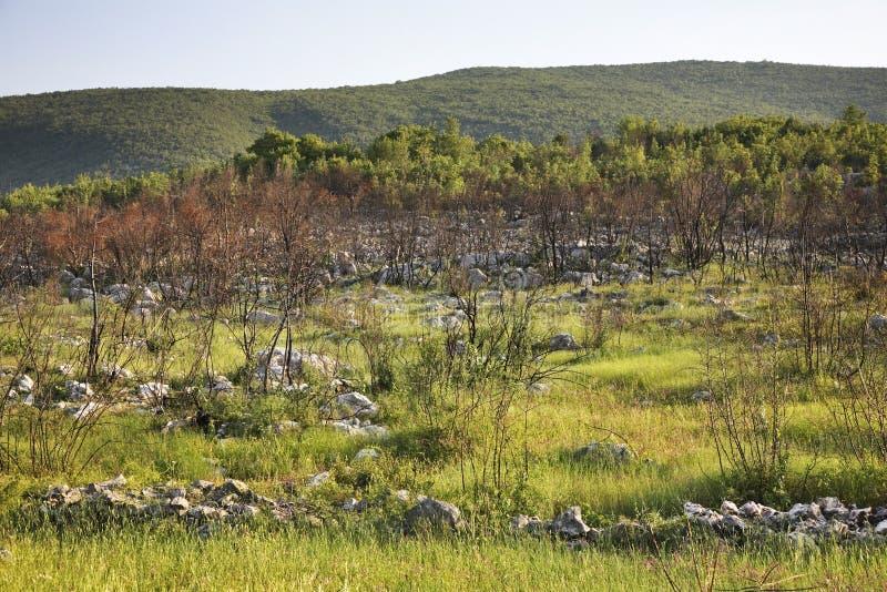 在Studenci附近的风景 达成协议波斯尼亚夹子色的greyed黑塞哥维那包括专业的区区映射路径替补被遮蔽的状态周围的领土对都市植被 免版税库存照片