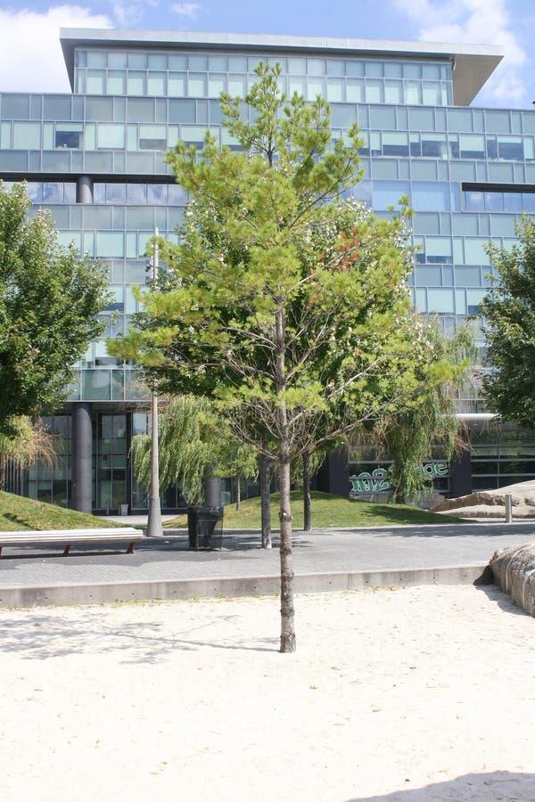 在Suger海滩多伦多,加拿大的树 库存图片