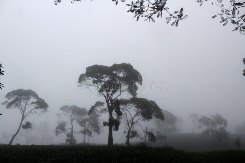 在Sukawana的有雾的风景 免版税库存照片