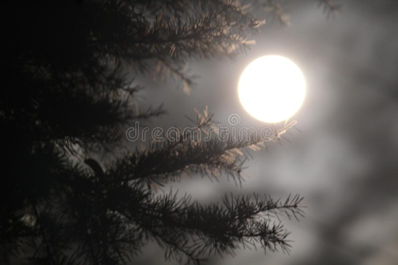 在supermoon的月光 免版税库存照片