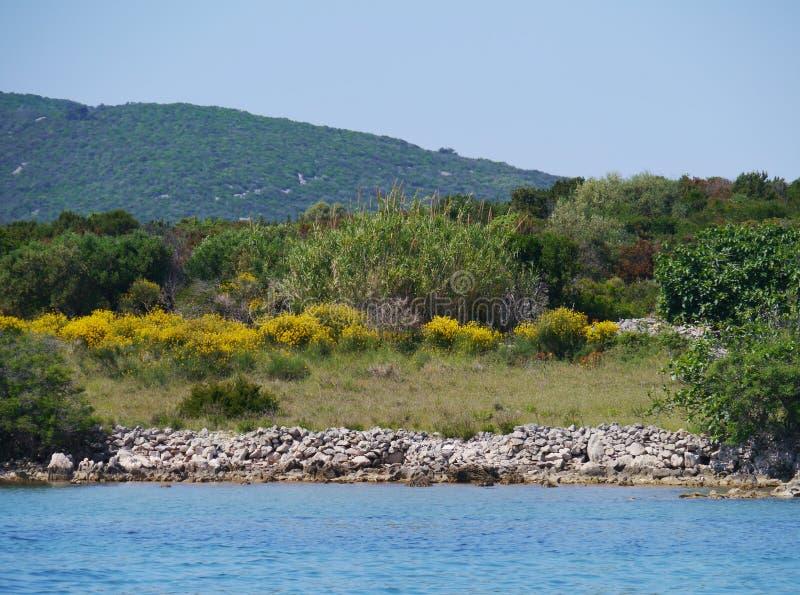在sv Petar的克罗地亚海岛上的常青灌木 免版税库存图片