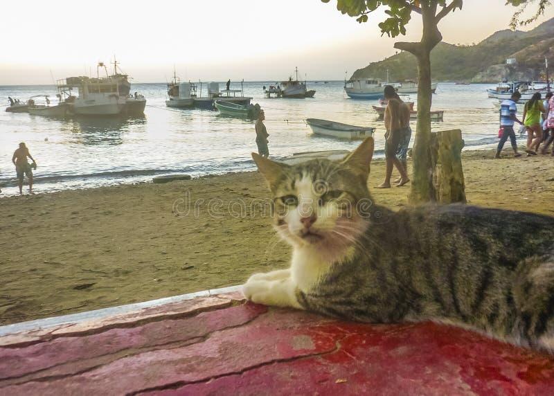 在Taganga海湾的渔船在哥伦比亚 图库摄影