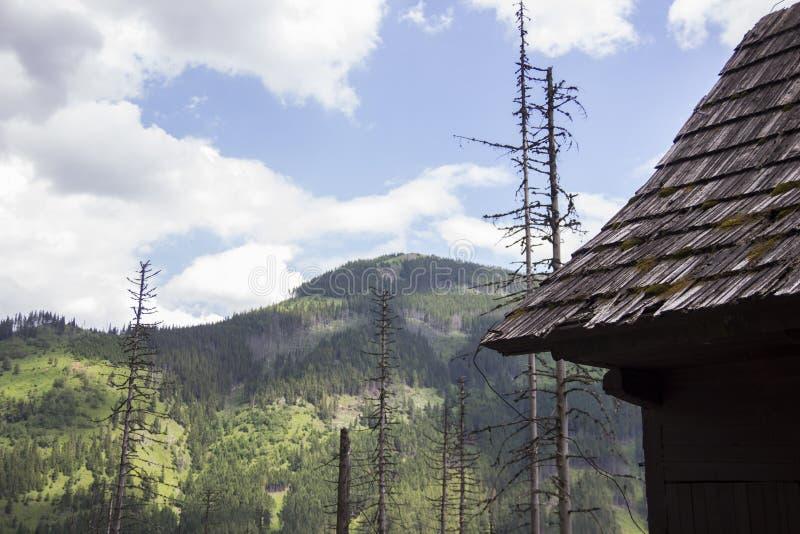 在Tatra山下的木小屋在扎科帕内,波兰 在波兰和斯洛伐克的Tatry 在海洋眼睛和黑色池塘附近 免版税库存照片