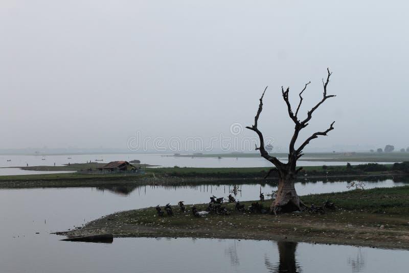 在Taungthaman湖岸的死的树  免版税库存图片