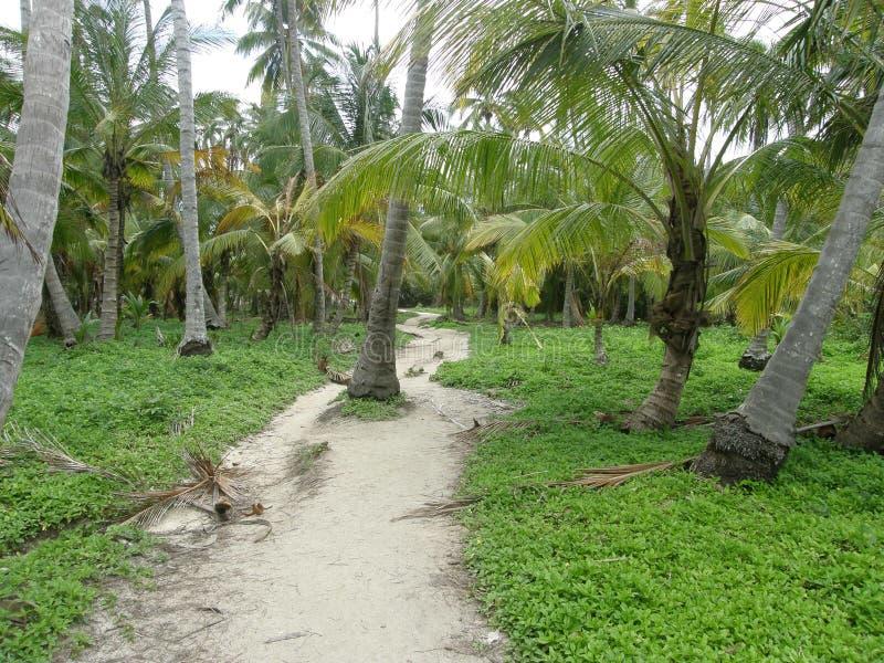 在Tayrona公园,哥伦比亚的密林道路 免版税库存照片