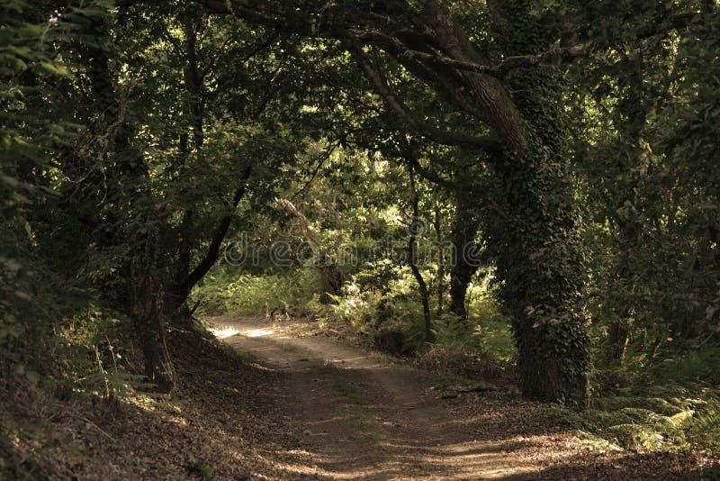 在te木头的一条道路 库存照片