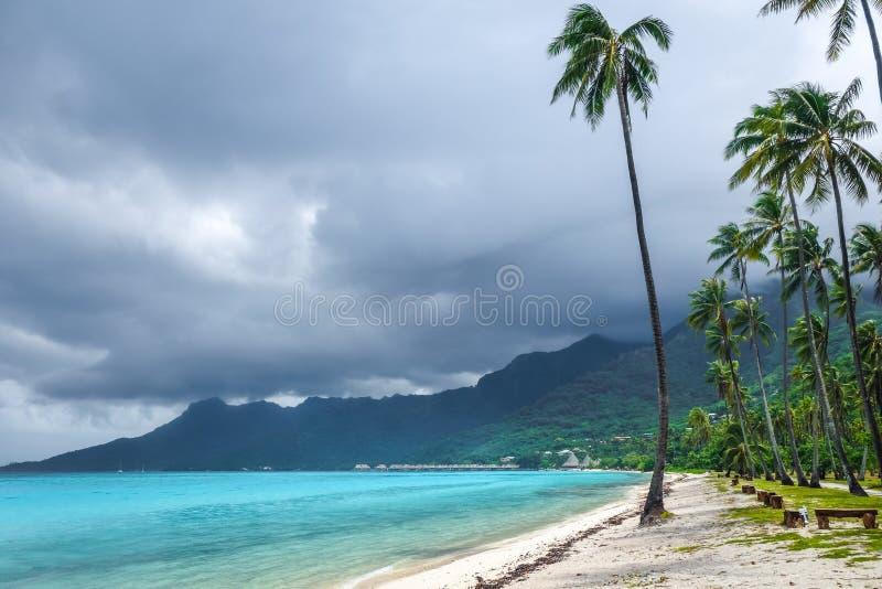 在Temae的棕榈树在Moorea海岛靠岸 图库摄影