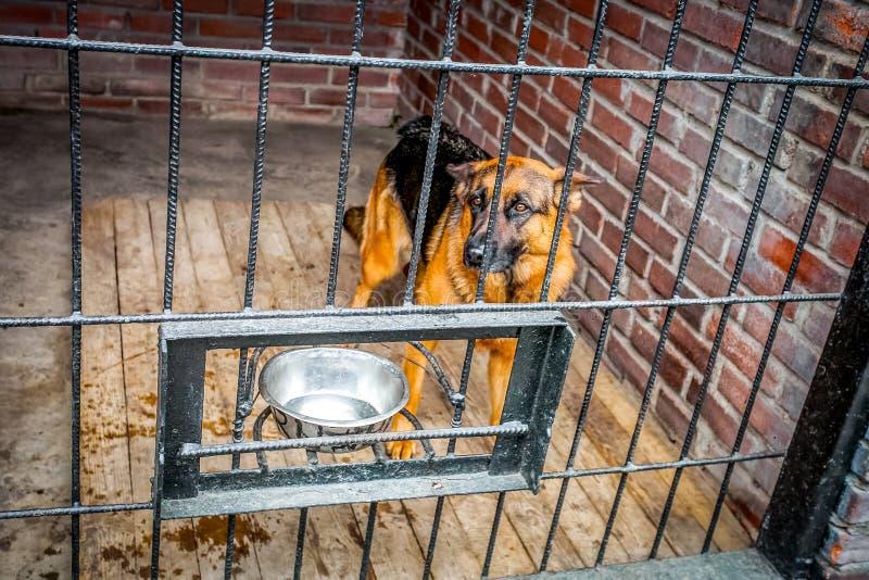 在tha条板箱的孤独的狗 免版税库存图片