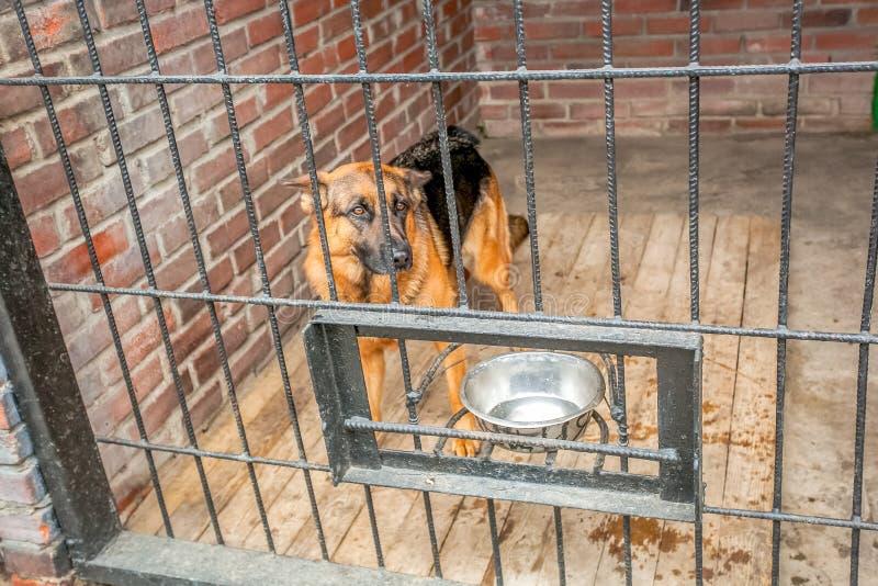在tha条板箱的孤独的狗 库存照片