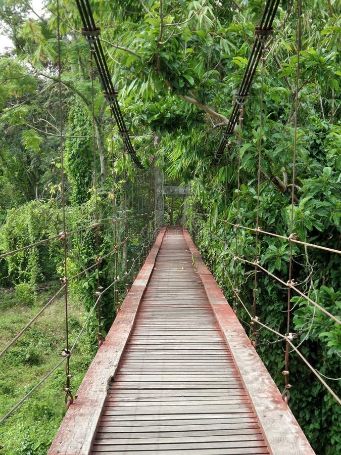在The Creek的吊桥在森林里 免版税库存图片