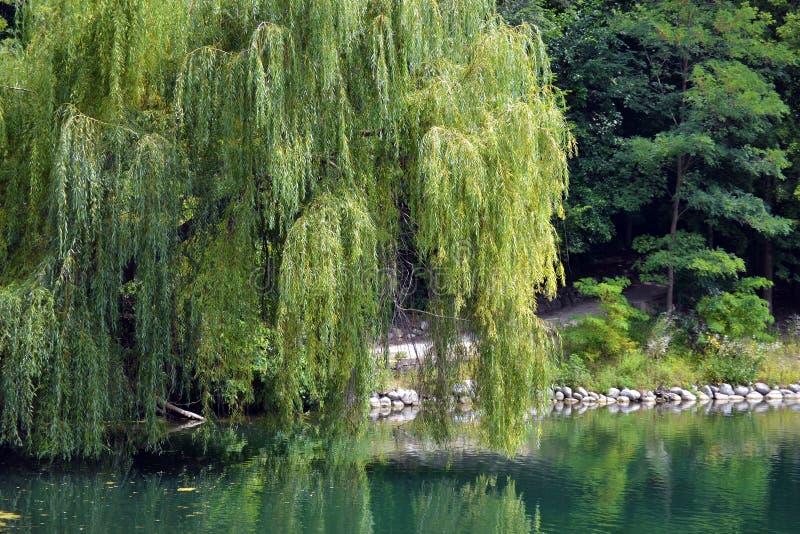 在The Creek的夏日 免版税库存照片