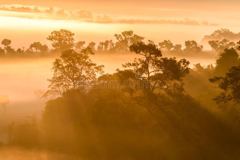 在Thung Salaeng Luang国家公园的日出有薄雾的在fo 免版税图库摄影