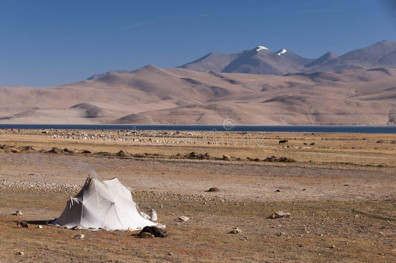 在Tso Moriri高原,拉达克,印度的游牧帐篷 免版税库存图片