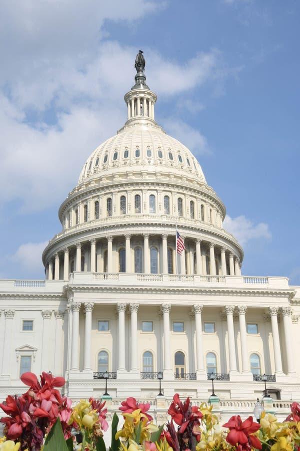 在U前面的花 S 国会大厦圆顶在华盛顿, D C ,美国 库存图片