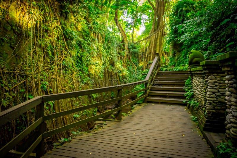 在Ubud神圣的猴子森林圣所、自然保护和印度寺庙复合体的龙桥梁在Ubud,巴厘岛,印度尼西亚 库存照片
