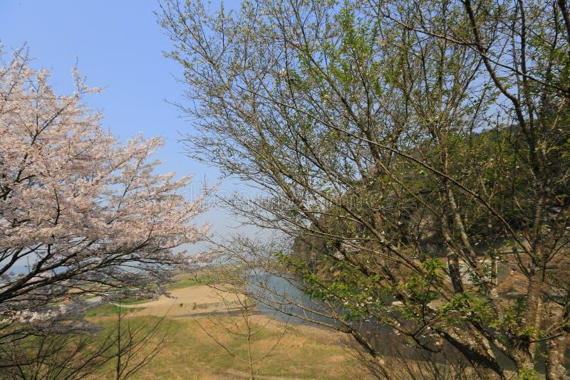 Download 在Umahori,京都的樱花 库存例证 - 图片: 91427134