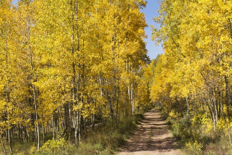 在Vail科罗拉多附近的美丽的金黄亚斯本被排行的山路 免版税库存图片