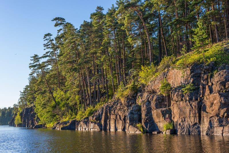 在Valaam海岛的陡峭的岩石海岸的杉树  库存图片