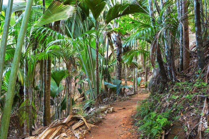 在Vallee De Mai棕榈森林5月谷的小径,普拉兰岛,塞舌尔群岛海岛  免版税库存照片