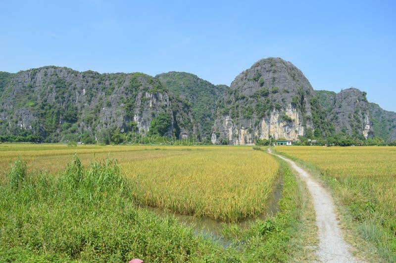 在viettnam的路 免版税图库摄影