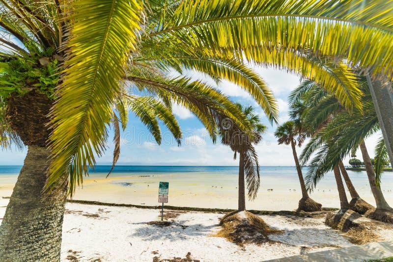 在Vinoy公园海滩的棕榈树在圣彼德堡 免版税库存照片