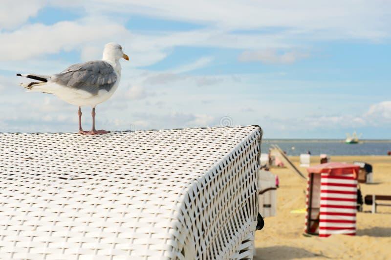 有海鸥的海滩帐篷Borkum 免版税库存图片