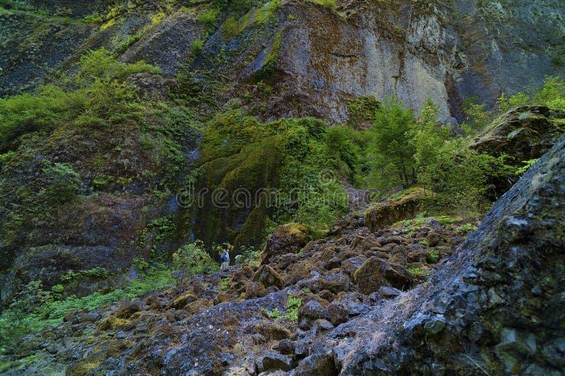 在Wahclella的山坡在哥伦比亚河峡谷落 免版税图库摄影