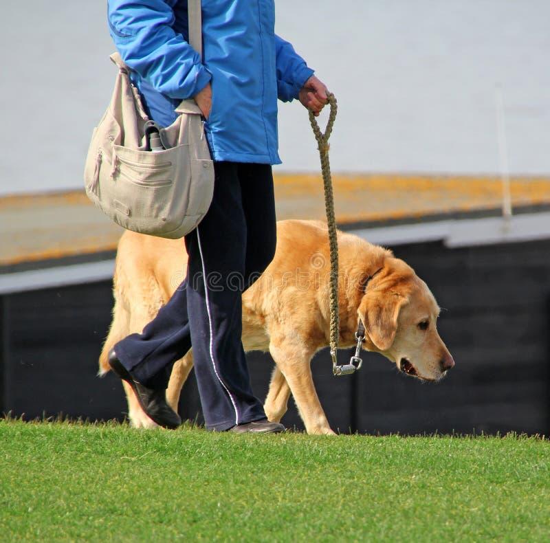 在walkies的老狗 免版税图库摄影