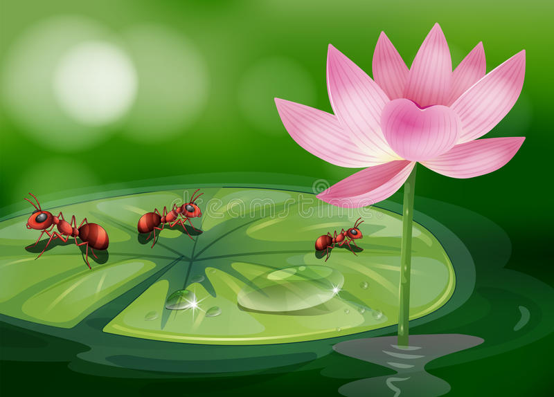 在waterlily植物上的三只蚂蚁 向量例证