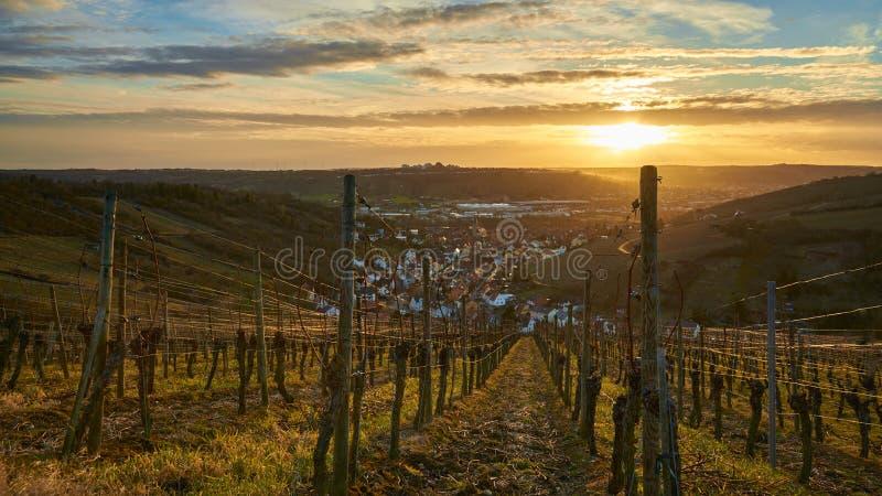 在wineyards的日落 图库摄影