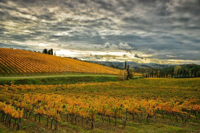 在Wineyards的秋天大气在托斯卡纳, Chianti,意大利 库存图片