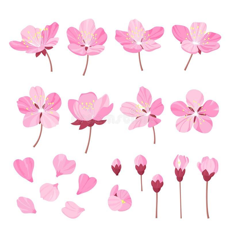 在wite背景隔绝的套美丽的樱桃树花 桃红色佐仓或苹果开花的收藏,日语 向量例证