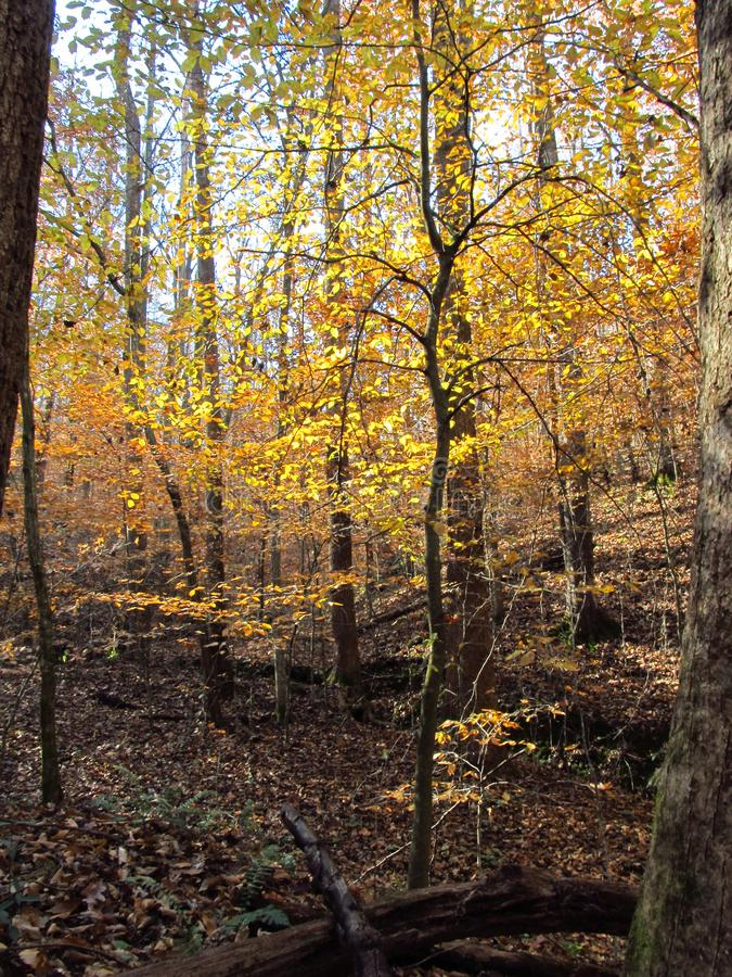 在Woods6的秋天 库存图片