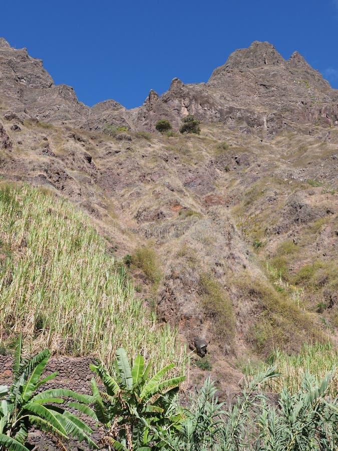 在Xo-Xo谷的山坡在非洲人佛得角风景的圣安唐岛海岛与垂直的香蕉树- 库存图片
