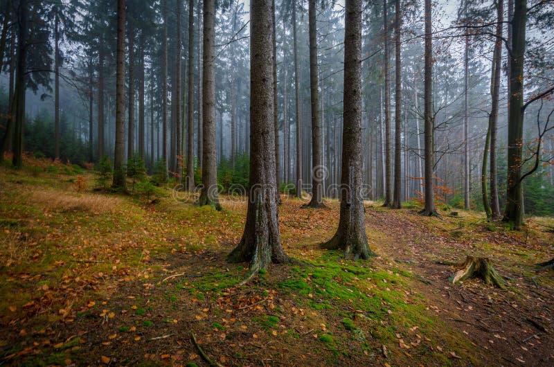 在Zdar nad Sazavou,捷克附近的有薄雾,五颜六色,黑暗的秋天森林 图库摄影