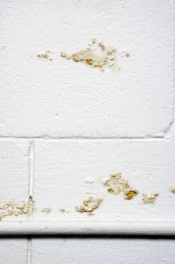 地下室故障泄漏湿气渗流墙壁水 库存图片