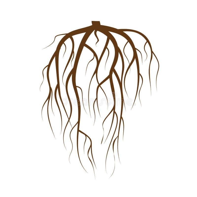 地下树根源传染媒介 布朗在白色背景舱内甲板被隔绝的例证的树根