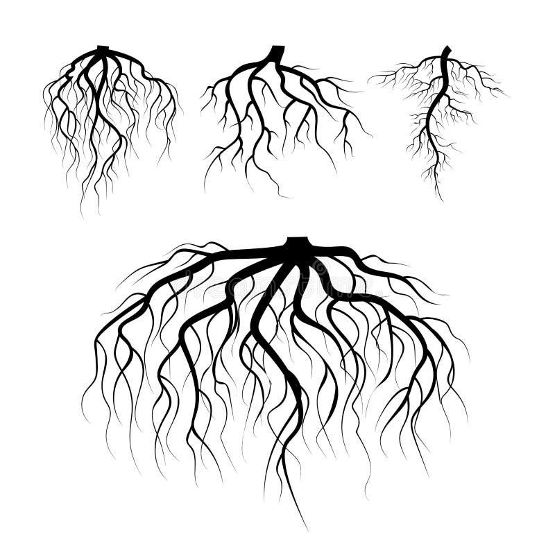 地下树根源传染媒介 被设置的地下植物根 树根黑色 植物剪影根的例证.