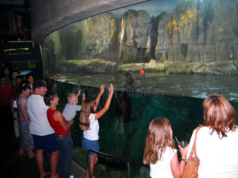 地下水族馆海狮 太平洋的水族馆,长滩,加利福尼亚,美国 免版税库存图片